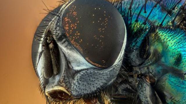 До 2% от насекомите по света изчезват всяка година