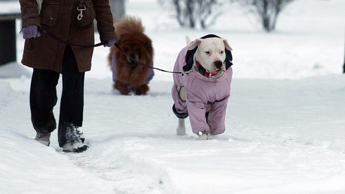 Кучетата са по-застрашени през зимата