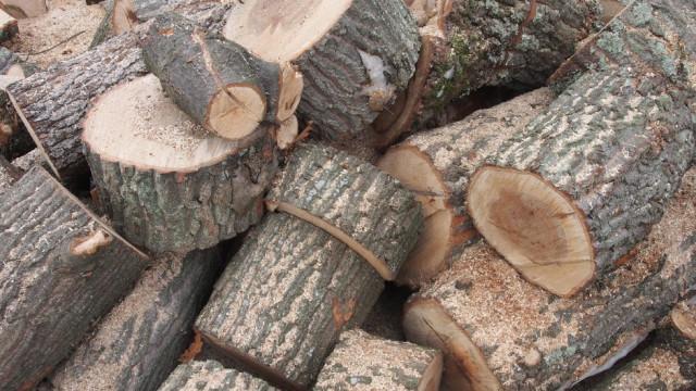 Горски служители в Сливен задържаха товарен автомобил с незаконна дървесина