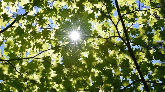 Слънчев календар – събота, 13 юни 2020 г.