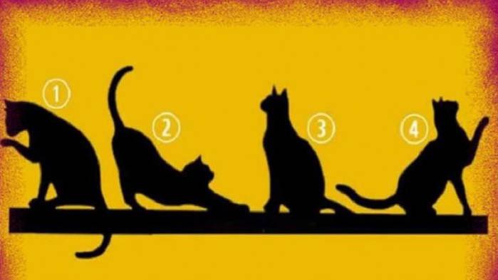 Изберете котка и открийте своята цел в живота