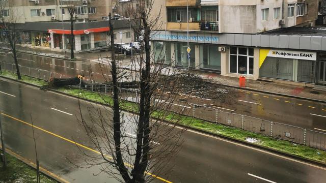 """Падна дърво на бул. """"Осми приморски полк"""" във Варна, трите ленти по трасето са непроходими"""