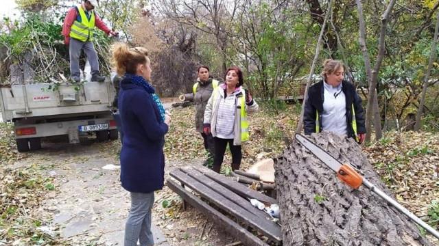 """Има ли днес """"компетентно"""" становище Стела Николова за падналите изгнили дървета и клони във Варна"""