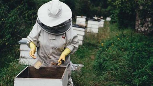 Пчелари: Браншът загива, искаме помощ