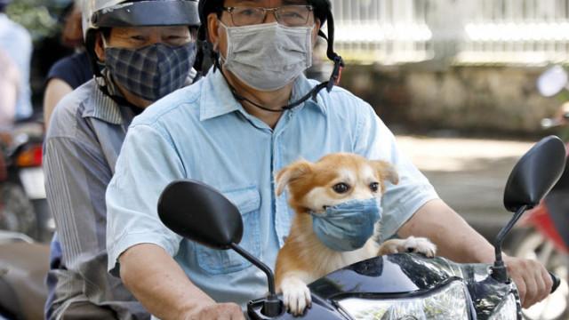 Тестват домашни котки и кучета за COVID-19