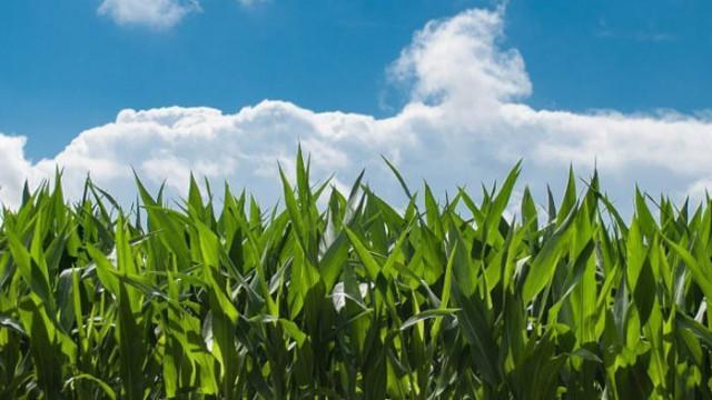 Чиста енергия! Електричество от растения са успели да получат учени от Израел