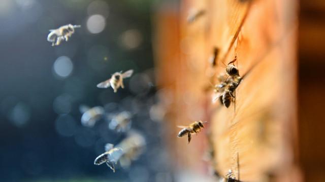 Невиждан мор по пчелите в Добричко