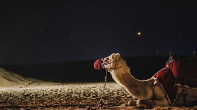 Мъж открадна камила, за да я подари на приятелката си