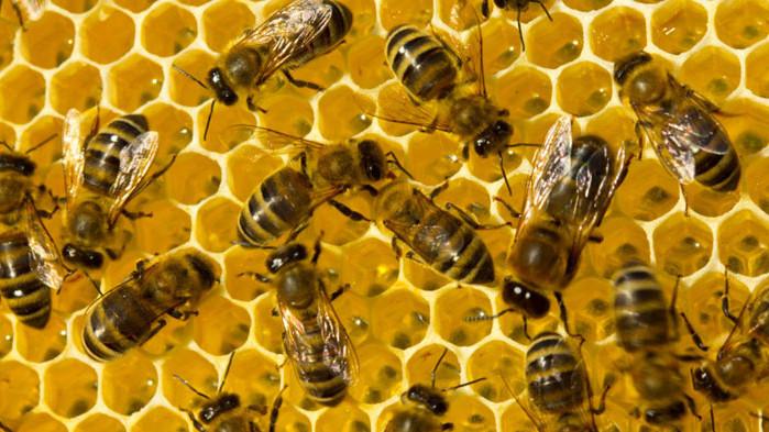 """Пчеларите искат да имат своя борса и да не са в сектор """"Животновъдство"""""""