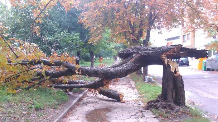 """Дърво падна и потроши автомобил в жк """"Чайка"""" във Варна"""