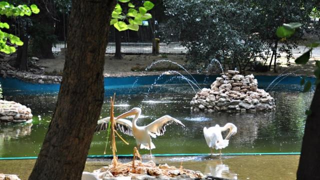 Започна ремонт на Зоопарка във Варна