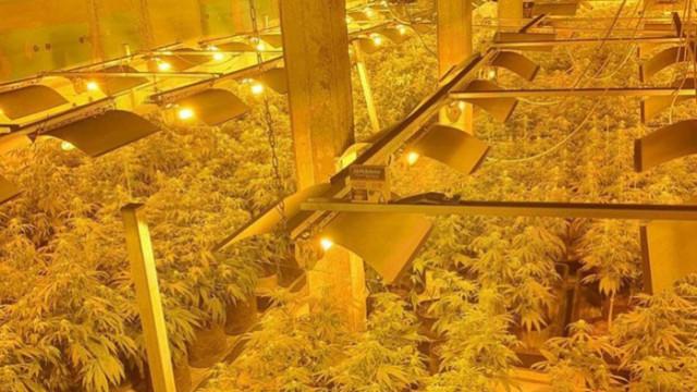 Разкриха модерна лаборатория за производство на марихуана в Ловешко