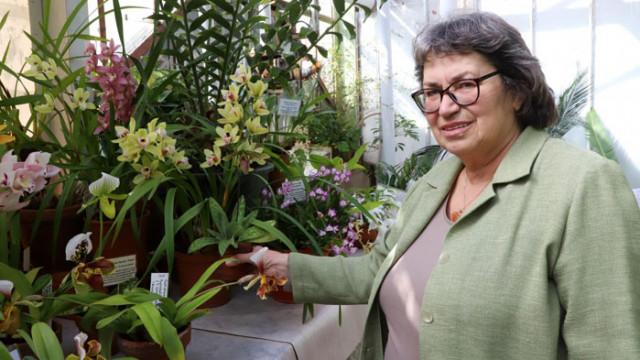 Доц. Антоанета Петрова: В България растат над 70 диворастящи орхидеи