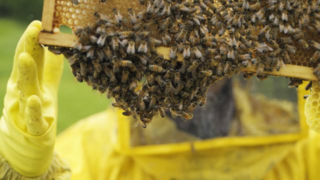 Започват проверки на пчелните семейства и регистрацията им