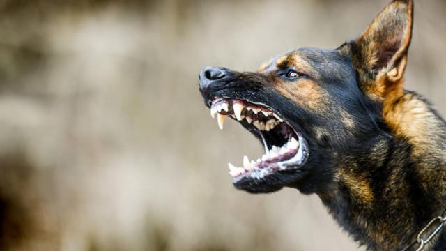 Прокуратурата проверява случая с нахапаното от куче дете в София