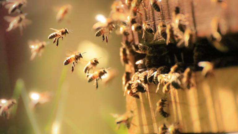 В Европарламента приеха опазването на пчелите и български породи животни
