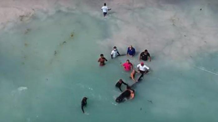 Спасиха заседнал кит в Доминиканската република (ВИДЕО)