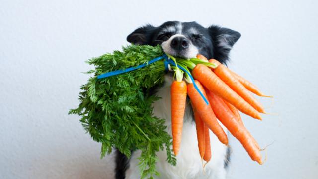 Кучетата, зеленчуците, ползите от тях и кои е безопасно да ядат