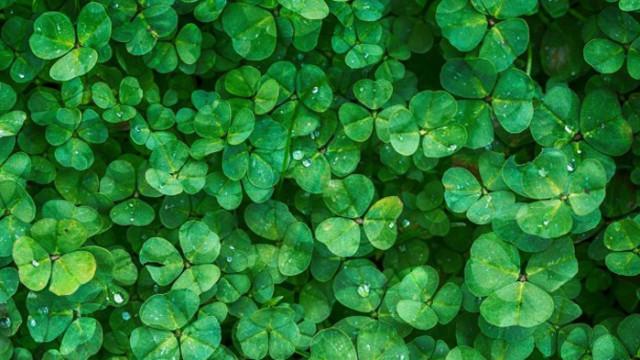Зеленото - цвят на здравето