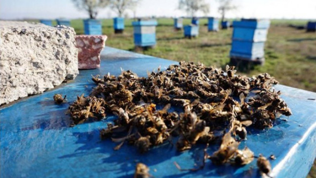 Отново масово измират пчели, започва спешна проверка