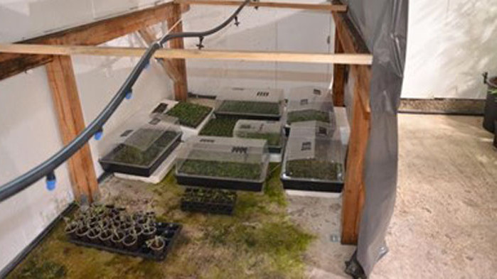 Модерна наркооранжерия в монтанското село Говежда разкриха криминалисти