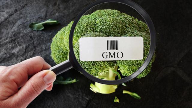 ЕС засилва натиска за дерегулация на ГМО-продуктите, предупреждават еколози