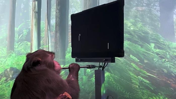 Neuralink и маймуната с мозъчен имплант, която играе Pong с ума си