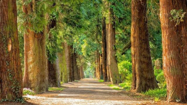 Лечебната енергия на дърветата