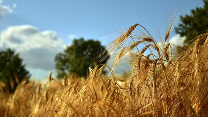 """Инспекцията по труда засилва допълнително контрола в сектор """"Селско стопанство"""""""