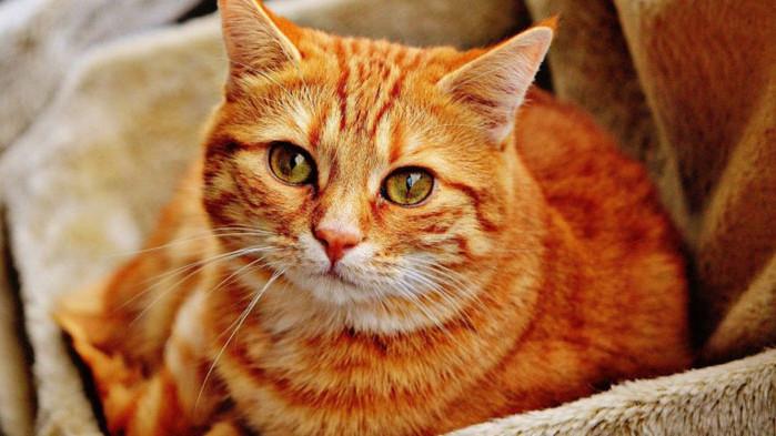 Котката – приятел, помощник и лек при безсъние и стрес