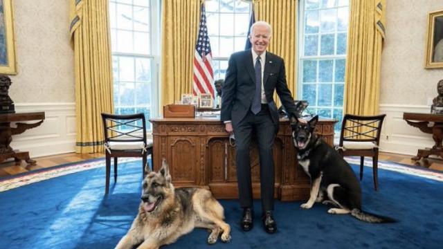 Джо Байдън, Джил Байдън и каква ще е съдбата на провинилото се куче Мейър