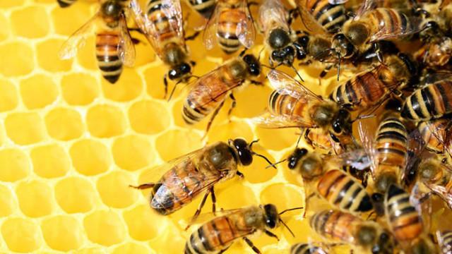 Учени ще предложат конкретни мерки за ограничаване на повишената смъртност при пчелните семейства