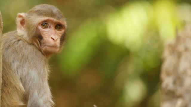Маймуна алкохолик осъдена доживот за пиянски прояви