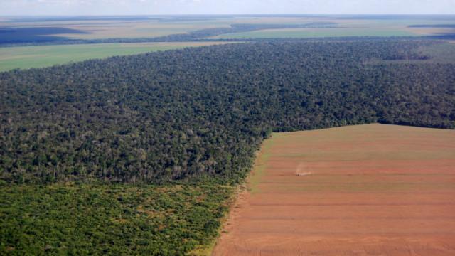 Само 3% от екосистемите в света остават непокътнати