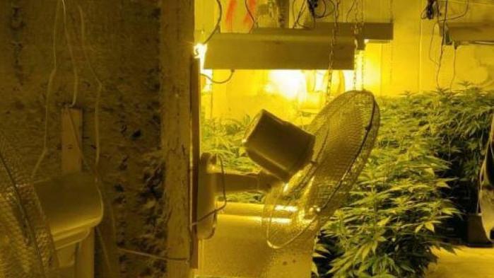 Разкриха наркооранжерия в сградата на бившия стъкларски завод в Перник