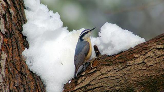 Учени обясниха защо птиците не замръзват през зимата