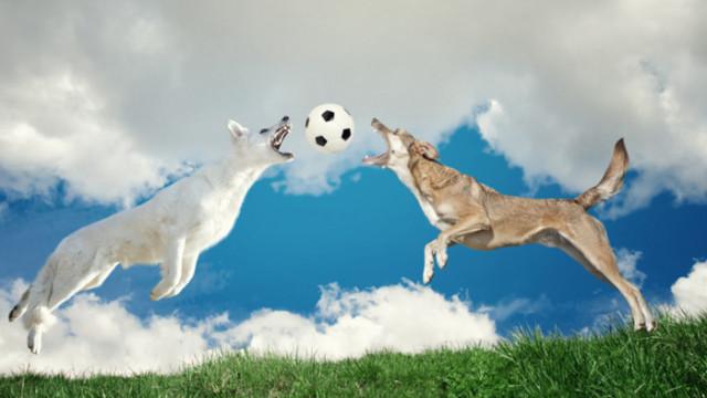 Кучетата, дресировката и влияе ли нравът им на бързината на обучението им