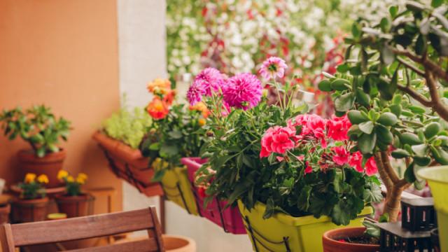 Най-подходящите цветя за терасата