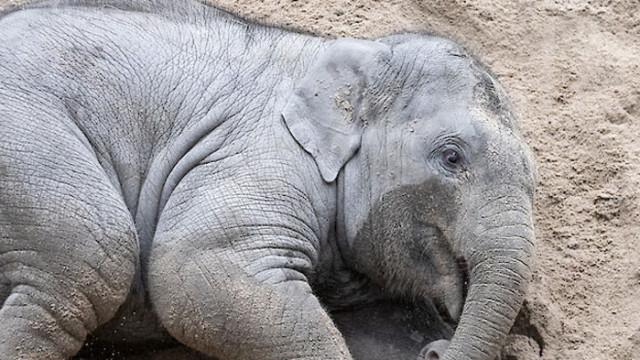 Мълния уби стадо от 18 индийски слона