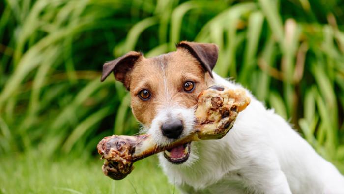 Как правилно и безопасно да даваме кокали на кучето си