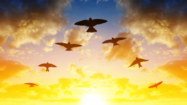 Птиците, различните видове и колко общо има по света