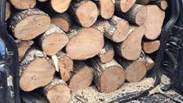 Районен съд - Варна глоби мъж за незаконно извозване на дърва от горския фонд