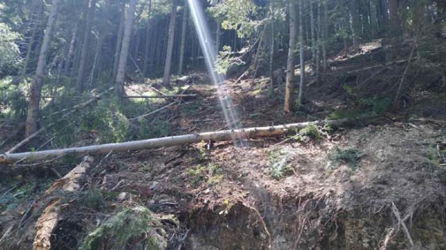 """Разкриха над 100 куб. незаконна дървесина в """"царските гори"""" край с. Мала църква"""
