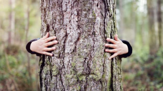 Днес е Световният ден на околната среда