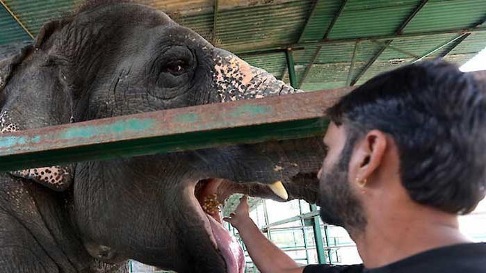 В Индия тестват слонове за COVID-19
