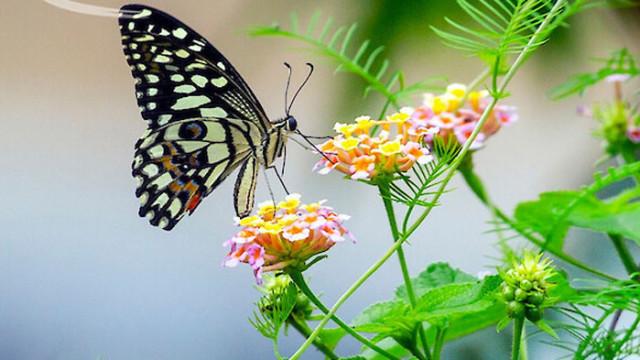 Колумбия е с най-голямото разнообразие от видове пеперуди в света