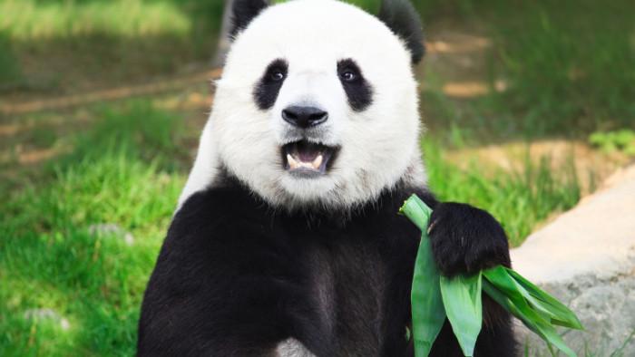 В зоопарка Уено в Токио преди часове са се родили