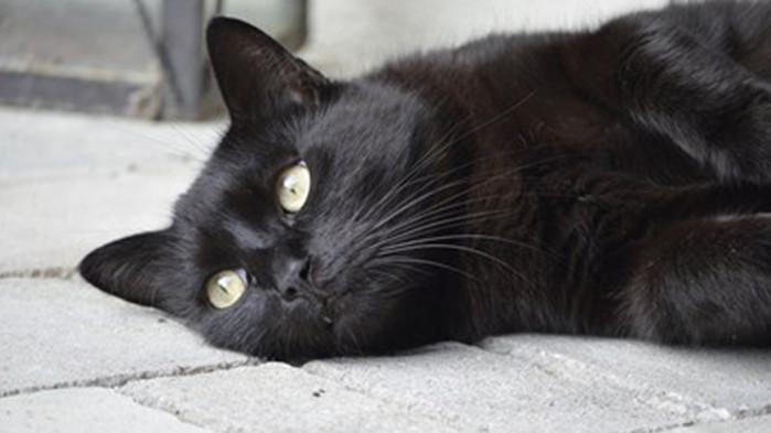 Стрелят по домашни котки в Горна Оряховица