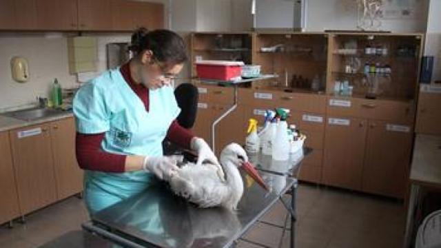 Варненският зоопарк приюти над 20 ранени щъркели