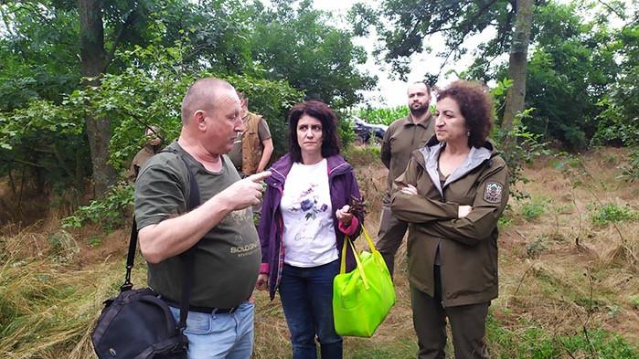 Учени констатираха необратимо съхнене при част от ясновите пояси в Североизточна България